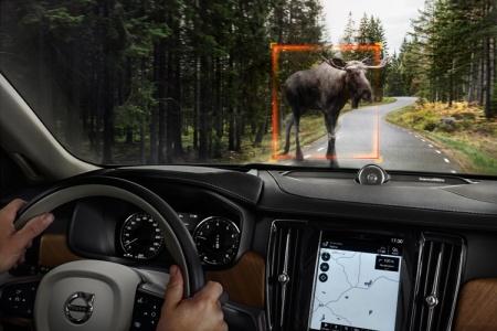 Новые технологии Volvo для обнаружения животных на дороге